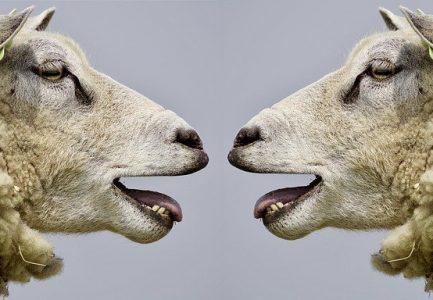 Einfühlsame = Gewaltfreie Kommunikation öffnet ❤-en + weckt Verständnis selbst im Corona-Streit